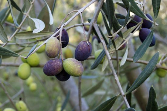 PieBlog-Olives1